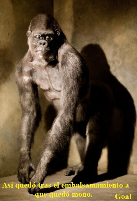 mono embalsamado