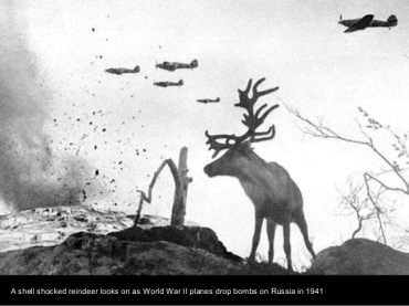 Ni los bichos se libraban de los bombardeos. Rusia 1941.