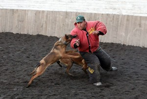Perros-atacando-300x203