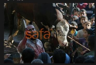 Es dificil saber quien es más animal, si la vaca o el que empuña un cuchillo
