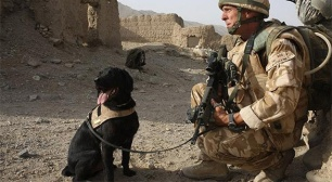 Cpl de Dave Heyhoe y perro rastreador de explosivos del tercer Batallón, el Regimiento de Paracaidistas. Foto: Getty.
