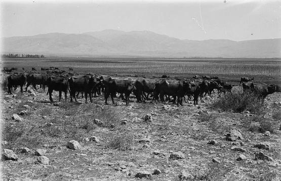 buffalo loc