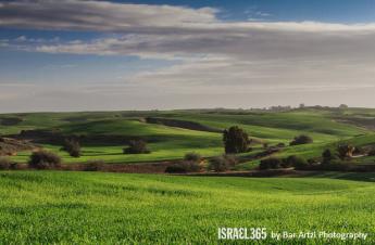 "Bar Artzi describe foto mejor de hoy: ""Esta no es la Toscana! Es Bitronot Ruchama en Israel ""- una hermosa reserva natural, al sur de Tel Aviv."