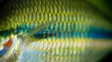 pez-ciencia-640x357