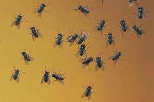 moscas-15-07-15