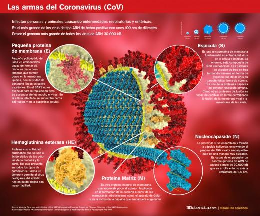 coronavirus-estructura-proteinas-capside-Coronavirus CoV-respiratory-sindrome