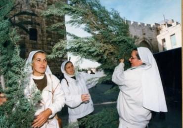 Israel distribuye arboles de navidad