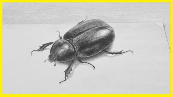 Dibujo de un escarabajo en 3d a carboncillo