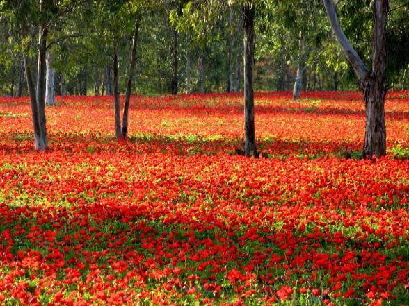 PikiWiki_Israel_10702_Plants_of_Israel